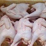 Thị trường - Tiêu dùng - Giảm nhập gà Hàn Quốc