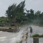 Tin tức trong ngày - Thanh Hóa: Gió giật mạnh, cây cối ngã đổ