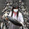 Nhật: Cá còn nhiễm phóng xạ hàng chục năm