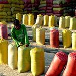 Thị trường - Tiêu dùng - Nông dân kêu khó tạm trữ lúa gạo