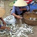 Tin tức trong ngày - Suýt mất mạng vì nhậu cá nóc