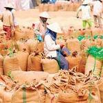 Thị trường - Tiêu dùng - Giá gạo Việt Nam có thể tăng trong vài tuần tới