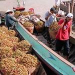 Thị trường - Tiêu dùng - Trái cây ĐBSCL: Vui nhờ giá, lo vì giá!