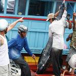 Thị trường - Tiêu dùng - Xuất khẩu cá ngừ tăng mạnh