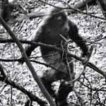 Phi thường - kỳ quặc - Sửng sốt trông thấy người rừng