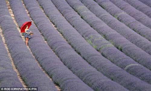Những cánh đồng hoa tuyệt đẹp ở nước Anh - 14