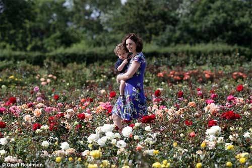 Những cánh đồng hoa tuyệt đẹp ở nước Anh - 13