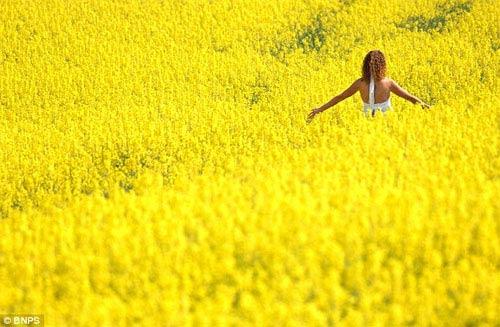 Những cánh đồng hoa tuyệt đẹp ở nước Anh - 15