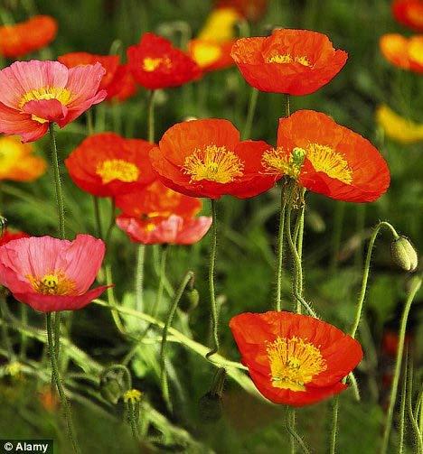 Những cánh đồng hoa bất tận - 12