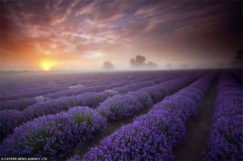 Những cánh đồng hoa bất tận - 2