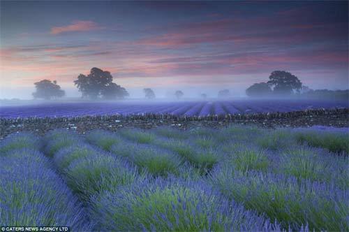 Những cánh đồng hoa bất tận - 3