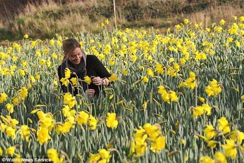 Những cánh đồng hoa bất tận - 9