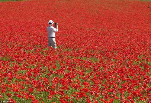 Những cánh đồng hoa bất tận - 11