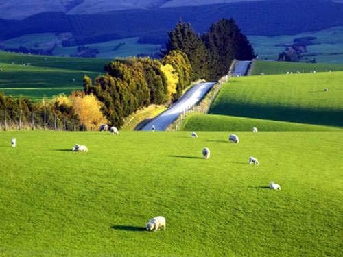 'Xứ sở thần tiên' ở New Zealand - 12