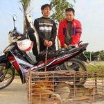 Tin tức trong ngày - Những vụ trộm chó khó tin ở Nghệ An