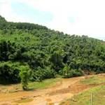 Tin tức trong ngày - Tan nát những cánh rừng thiêng