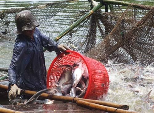 ĐBSCL: Thủy sản thất thu hàng tỷ USD - 1
