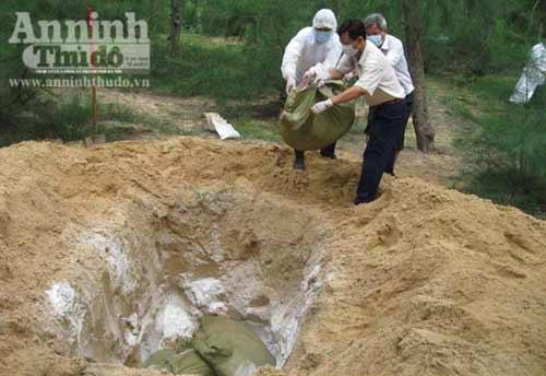 Cán bộ làm ngơ: Lò mổ giết thịt lợn bệnh - 2