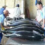 Thị trường - Tiêu dùng - Việt Nam xuất khẩu cá ngừ thứ 3 thế giới