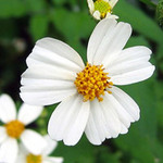 Làm đẹp - Vẽ hoa đồng nội lên tay xinh