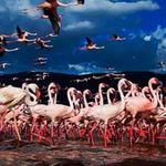 Du lịch - Sững sờ trước vẻ đẹp của hồ hồng hạc