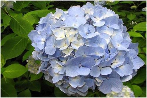 Chiêm ngưỡng 10 loài hoa quyến rũ nhất thế giới - 4