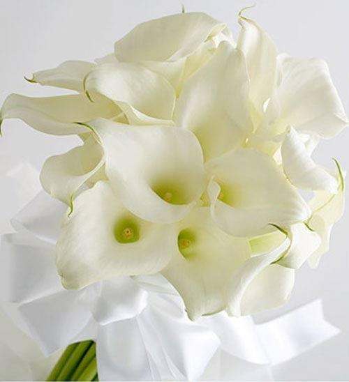 Chiêm ngưỡng 10 loài hoa quyến rũ nhất thế giới - 5