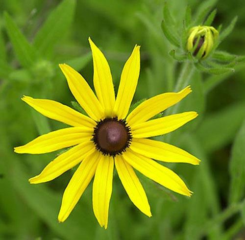 Chiêm ngưỡng 10 loài hoa quyến rũ nhất thế giới - 6