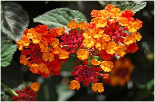 Chiêm ngưỡng 10 loài hoa quyến rũ nhất thế giới - 9