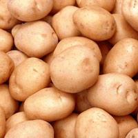 Cách nhận biết khoai tây Trung Quốc