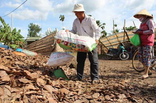 Gom bán lá khô, nguy cơ suy kiệt vườn điều - 1