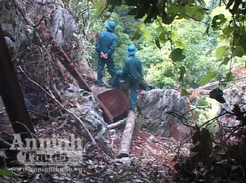 """Nổ mìn chặn đường vận chuyển gỗ của """"lâm tặc"""" - 2"""