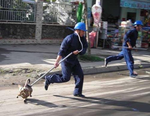 Lập đội đặc nhiệm bắt chó, mèo thả rông - 1