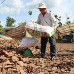 Thị trường - Tiêu dùng - Gom bán lá khô, nguy cơ suy kiệt vườn điều