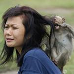 Phi thường - kỳ quặc - Độc và lạ ở lễ hội buffet dành cho khỉ