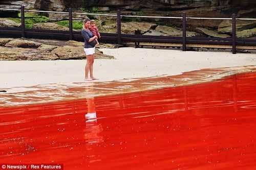 Nước biển chuyển thành màu đỏ như máu - 1