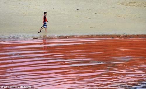 Nước biển chuyển thành màu đỏ như máu - 4