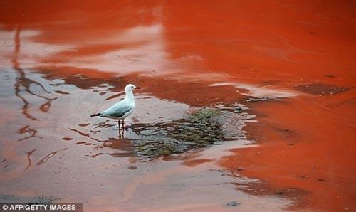 Nước biển chuyển thành màu đỏ như máu - 6