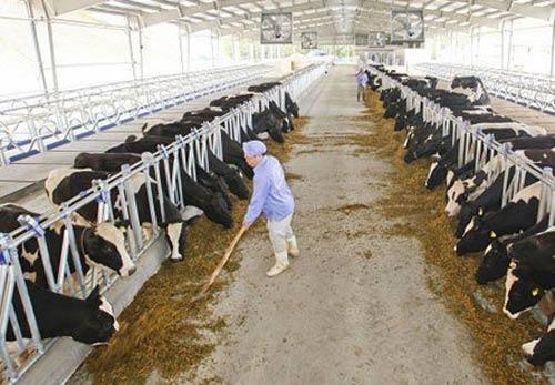 Sữa tươi tuyệt hảo nhập nhèm nguồn gốc - 1