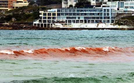 """Đóng cửa biển """"máu"""" ở Sydney - 2"""