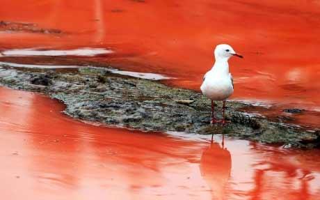 """Đóng cửa biển """"máu"""" ở Sydney - 4"""