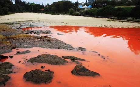 """Đóng cửa biển """"máu"""" ở Sydney - 6"""