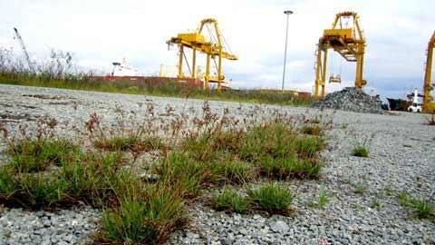 TP.HCM: Cảng quốc tế hàng trăm tỷ hoang tàn - 5