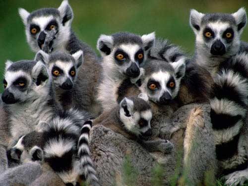 Đắm chìm cùng thiên đường động vật Madagascar - 2