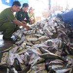 Thị trường - Tiêu dùng - Quảng Ngãi: Tiêu hủy 1,5 tấn cá nóc