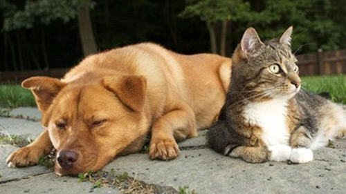 """Sẽ sửa quy định chó mèo """"chính chủ"""" - 1"""