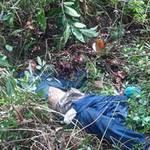 An ninh Xã hội - Tội ác giữa rừng Muồng