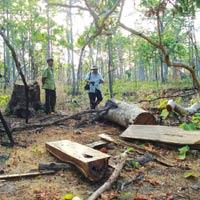 Đi săn thú rừng, tử vong vì súng cướp cò