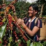 Thị trường - Tiêu dùng - Nông dân có thể định đoạt giá nông sản