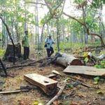 Tin tức trong ngày - Đi săn thú rừng, tử vong vì súng cướp cò